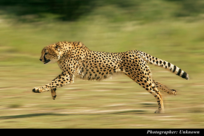 control-camera-cheetah